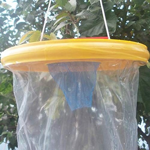 Trap Zapper Top Catcher The Ultimate Fly Lawn